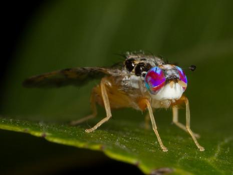 זבובים מעוקרים בדרך לירדן